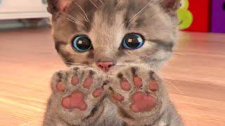 Kočičí cesta  malé roztomilé hravé koťátko a jeho cesta celý příběh