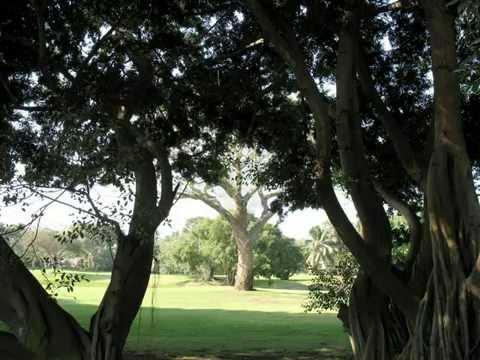 Фото слайд-шоу Природа. Деревья.