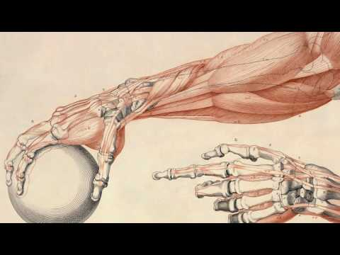 Как вывести молочную кислоту из мышц?