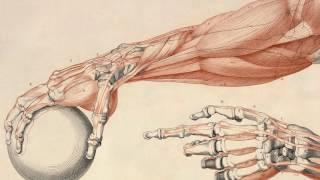 видео Молочная кислота в мышцах и как ее вывести