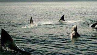 Shark Swarm: Body Count