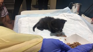 LIVE: Adoptable kittens handfed at ASPCA | The Dodo LIVE