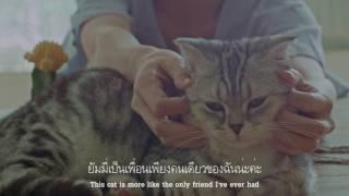 Cat Film - ยินดีที่ได้พบเธอ (stoondio) กำกับโดย ภูริพัฒน์ พฤกษ์อำนวย
