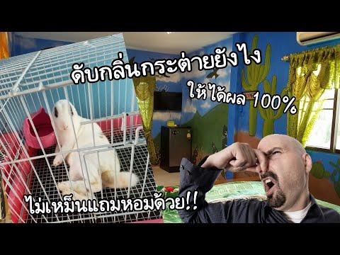 วิธีดับกลิ่นอึน้องกระต่ายที่ได้ผลที่สุด!![ต้องดูให้จบ]   KeawmaRoonOsum