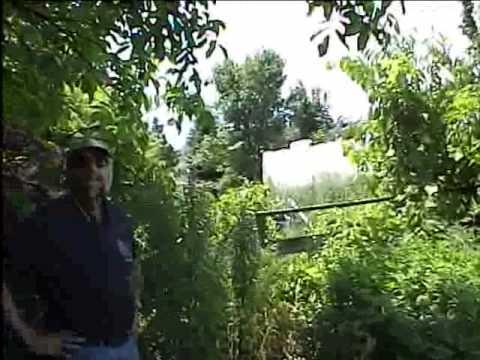 Master Herbalist Herb Walk 2 of 2