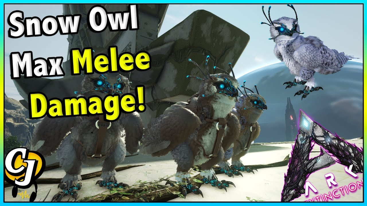 Ark Insight Snow Owl Max Melee Damage Ark Survival Evolved Youtube Today we compare the new snow owl and the argentavis! ark insight snow owl max melee damage ark survival evolved