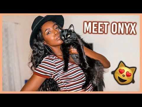 VLOG | Meet My PU$$Y CAT Onyx 😻 Watch Me Introduce My New Cat To My Home! Also – CAT HAUL!