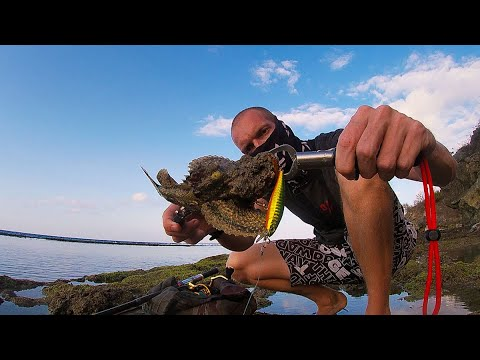 Catching The MOST VENOMOUS FISH In The World! - Fishing For Stonefish!