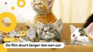 Viral kattenfilmpjes in de bioscoop te zien