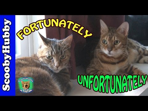 Fortunately Unfortunately (The Game) -- Cat Clips #333