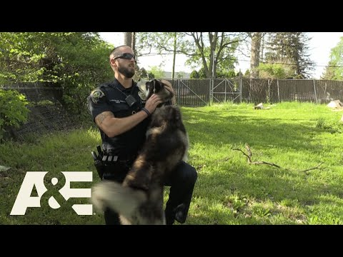 Wendy - Officer Rescues Dog And Then Adopts Him!