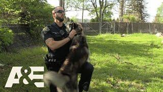 Live PD: A Cop's Best Friend (Season 3) | A&E