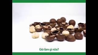 Macca VIP: Mẩu chuyện ngắn của những hạt Mắc ca (Macca)