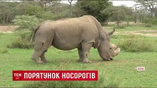 Світ збирає гроші на процедуру штучного запліднення для рідкісного носорога