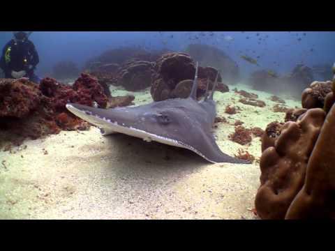 Diving Flinders Reef, Moreton Island - Showreel