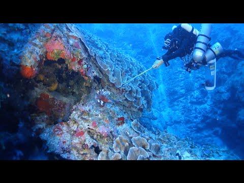 2014 Cayman Islands Deep Reef Expedition | California Academy of Sciences