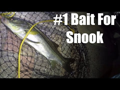 More Snook Caught On This Irresistible Bait Than Any In 40 Years