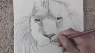Как нарисовать тигра /How to Draw a Tiger(Как нарисовать тигра /How to Draw a Tiger Как нарисовать тигра /How to Draw a Tiger Как нарисовать тигра /How to Draw a Tiger Как..., 2014-09-22T19:33:07.000Z)