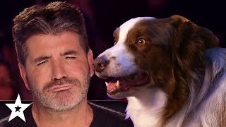Simon Cowells FAVOUR TE Dog Auditions On Got Talent  Got Talent Global