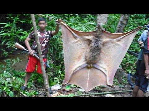 GIANT BAT OR SOMETHING ELSE?