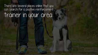 How Can I Find A Positive Reinforcement Dog Trainer?