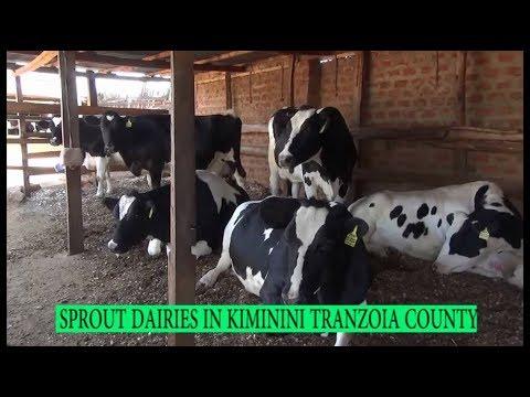 Farmers Check: Dairy Farming