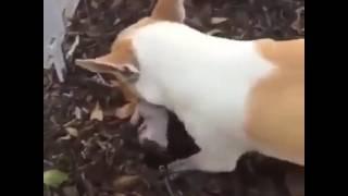 Похороны щенка
