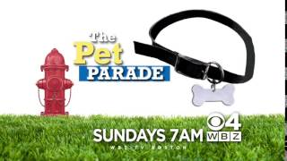 """WBZ Station ID:  """"Lucky Dog"""" and """"Pet Parade"""""""