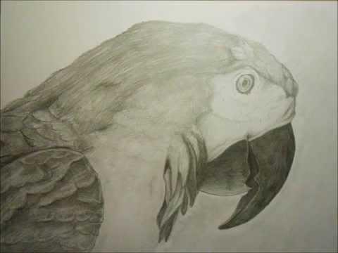Disegno pappagallo a matita youtube for Disegni di lupi facili