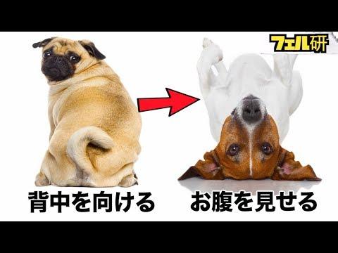 【衝撃】犬の気持ちがよくわかる5つの方法