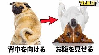 あなたは犬の気持ち理解してる!? ペットはさまざまな状況下で、飼い主...