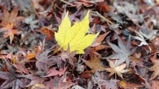 サニーデイ・サービス -枯れ葉 これを聞くと学生の頃の、秋の景色が甦る.