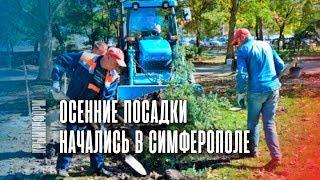 Осенняя высадка деревьев началась в Симферополе