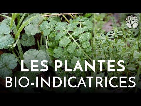 Les plantes bio-indicatrices