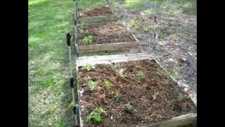 Planting My Raised Bed Gardens By My Off Grid Solar Camper