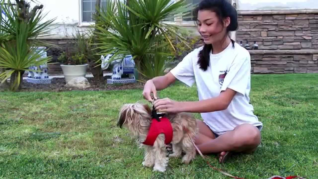 Make Dog Harness Leash