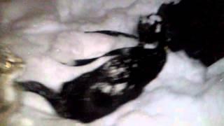 Кошки гуляют на рождество))