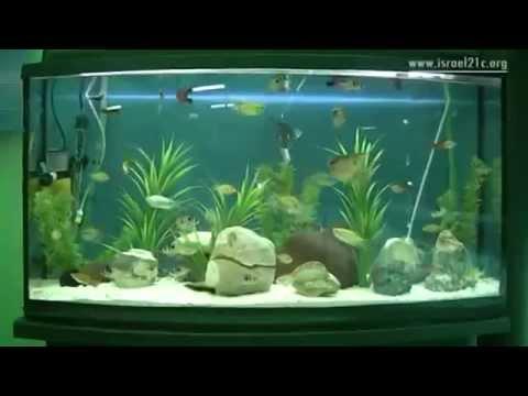 Israel Legal – Criando peixes no deserto