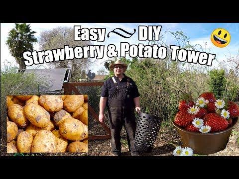 Easy DIY  Strawberry / Potato Tower Using A Laundry Basket