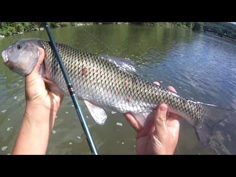 Bait Fishing #49 - River Fishing for Big Fallfish, Smallmouth Bass, and  Yellow Perch with Crayfish