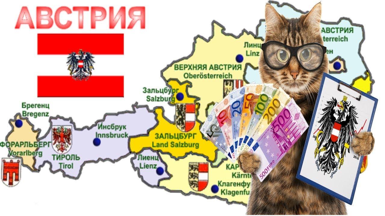 Затраты на котов