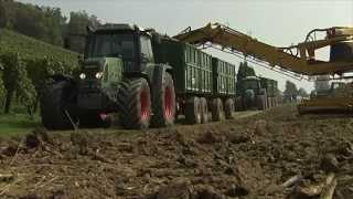 TraktorTV Folge 19 - Rübenernte in der Schweiz