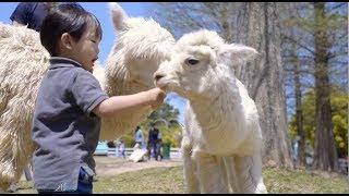 [兒童攝影] 動物農場親子寫真/四四南村/信義區/小巴老師攝影