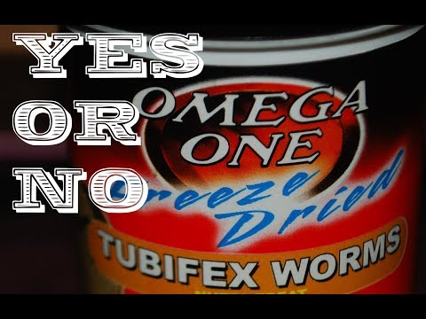Feeding Freeze Dried Tubifex Worms Yes Or No ?