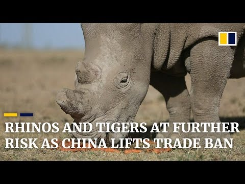 China reverses 25-year ban on use of rhino and tiger products