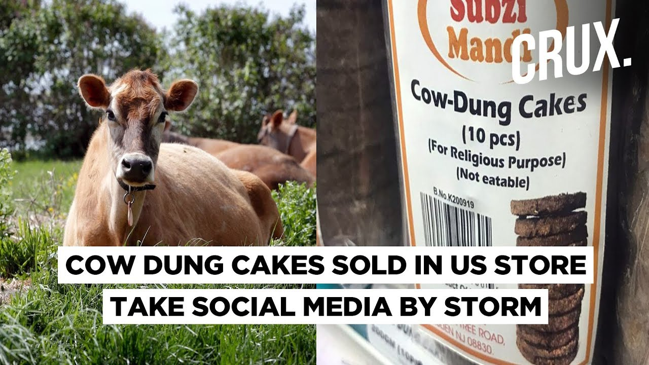 Image result for Cow Piss and Dung Cakes to Fight Coronavirus cartoons