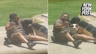 UPS guy caught in a literal dog pile | New York Post