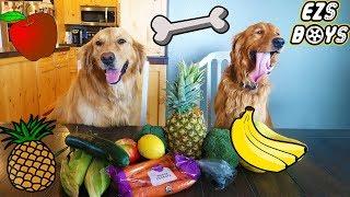 Best DOG Challenge! Golden Retriever Showdown