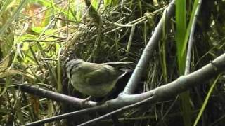 Ptaki Budują Gniazda