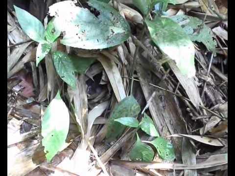 Documentary: Protect Wildlife in Megatha Forest (Karen language)
